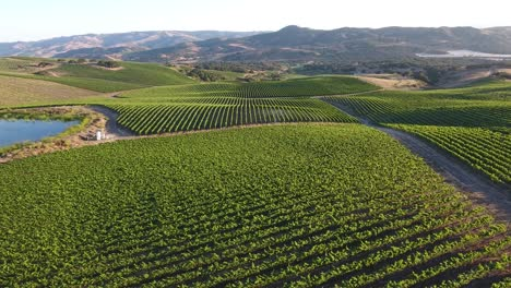 Beautiful-aerial-of-hilly-vineyards-in-the-grape-growing-region-of-Californias-santa-rita-appellation-21