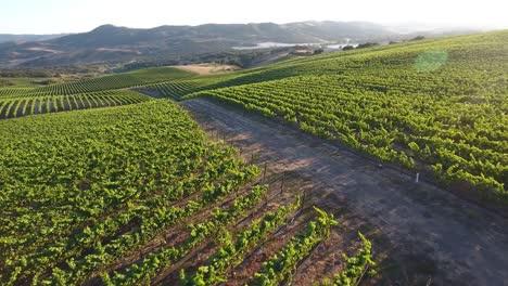 Beautiful-aerial-of-hilly-vineyards-in-the-grape-growing-region-of-Californias-santa-rita-appellation-22