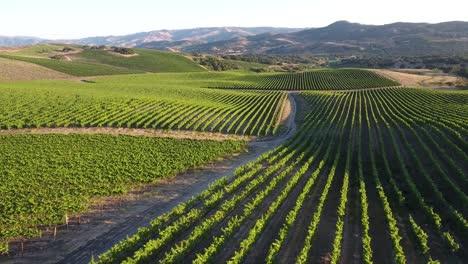 Beautiful-aerial-of-hilly-vineyards-in-the-grape-growing-region-of-Californias-santa-rita-appellation-24