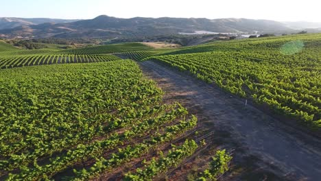 Beautiful-aerial-of-hilly-vineyards-in-the-grape-growing-region-of-Californias-santa-rita-appellation-25