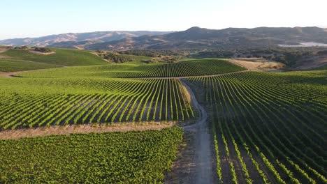 Beautiful-aerial-of-hilly-vineyards-in-the-grape-growing-region-of-Californias-santa-rita-appellation-26
