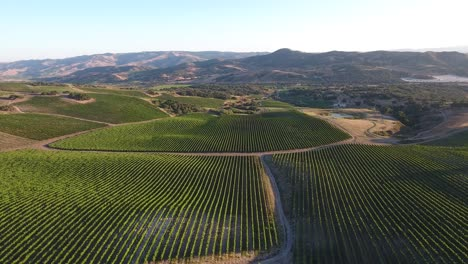 Beautiful-aerial-of-hilly-vineyards-in-the-grape-growing-region-of-Californias-santa-rita-appellation-27