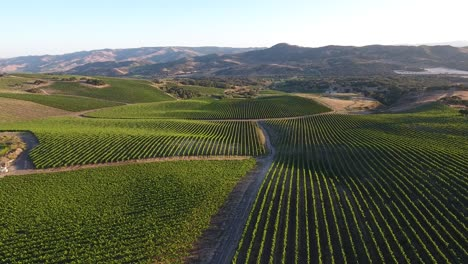 Beautiful-aerial-of-hilly-vineyards-in-the-grape-growing-region-of-Californias-santa-rita-appellation-28
