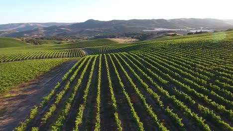 Beautiful-aerial-of-hilly-vineyards-in-the-grape-growing-region-of-Californias-santa-rita-appellation-29
