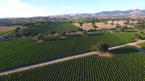 Beautiful-aerial-of-vineyards-in-Californias-santa-ynez-valley-appellation-in-wine-country