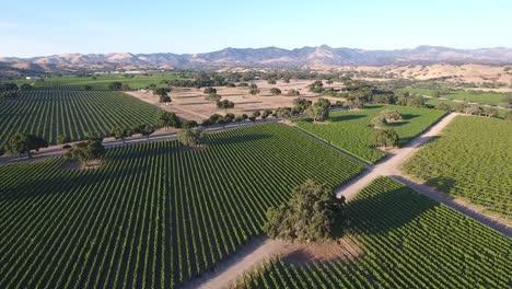 Beautiful-aerial-of-vineyards-in-Californias-santa-ynez-valley-appellation-in-wine-country-1