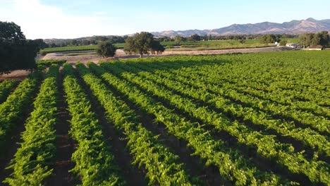 Hermosa-Antena-De-Viñedos-En-Californias-Denominación-Del-Valle-De-Santa-Ynez-En-Wine-Country-2