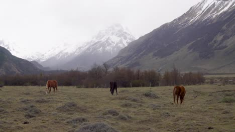 Horses-graze-under-cloudy-skie-in-a-meadow-on-the-outskirts-of-Fitz-Roy-National-Park-Argentina