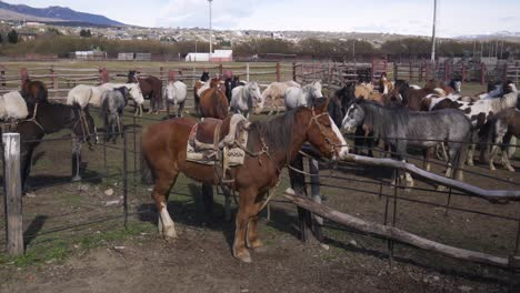 Horses-a-vital-part-of-Argentinas-gaucho-culture-gathered-in-a-makeshift-coral-in-El-Calafate-Argentina