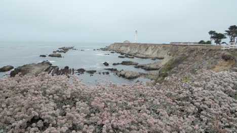 Beautiful-dolly-shot-of-wildflowers-and-wave-breaking-on-the-shore-below-the-historic-Point-Arena-Lighthouse-California-1
