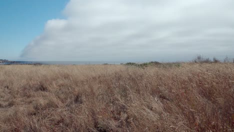 Dolly-Shot-De-Pastos-Nativos-Azotados-Por-El-Viento-Salvaje-Y-Espectaculares-Nubes-Sobre-Los-Promontorios-De-Mendicino-California