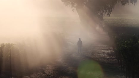 Beautiful-backlit-clip-of-a-man-wearing-a-cowboy-hat-walking-in-a-the-sunlit-fog-in-a-Pope-Valley-vineyard-California