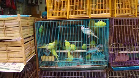 Birds-in-wooden-cages-are-offered-for-sale-in-a-Hong-Kong-China-pet-market