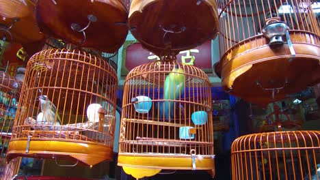 Birds-in-wooden-cages-are-offered-for-sale-in-a-Hong-Kong-China-pet-market-1