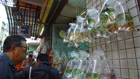 Exotic-fish-are-offered-for-sale-in-plastic-bags-on-a-wall-in-a-market-shop-in-Hong-Kong-China