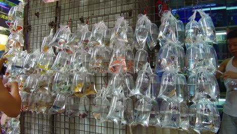 Exotic-fish-are-offered-for-sale-in-plastic-bags-on-a-wall-in-a-market-shop-in-Hong-Kong-China-1