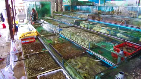 Exotic-fish-are-offered-for-sale-in-tanks-in-a-pet-market-shop-in-Hong-Kong-China