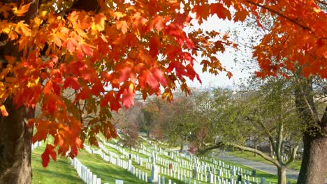 Slow-Moving-Tilt-Down-Beside-Grave-Sites-In-Arlington-National-Cemetery-Washington-Dc-With-Fall-Colors