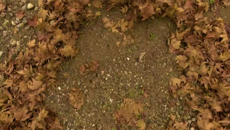 Aerial-over-fallen-leaves-on-the-forest-floor