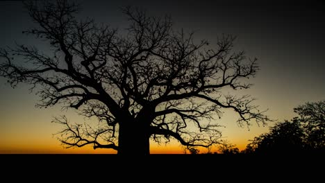 Time-lapse-sunset-and-dusk-over-a-majestic-tree-in-Queensland-Australia