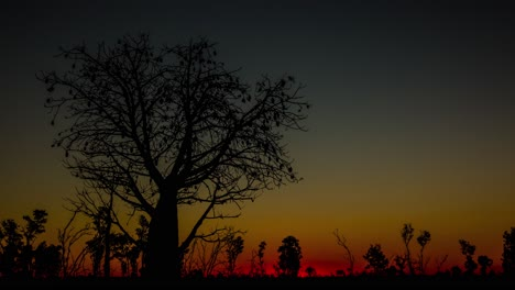 Time-lapse-sunset-and-dusk-over-a-majestic-tree-in-Queensland-Australia-1