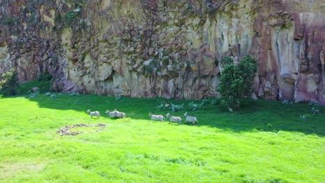 Antena-De-Un-Grupo-De-Cebras-Corriendo-En-El-Parque-Nacional-Hell&#39-s-Gate-El-Valle-Del-Rift-Kenia-África
