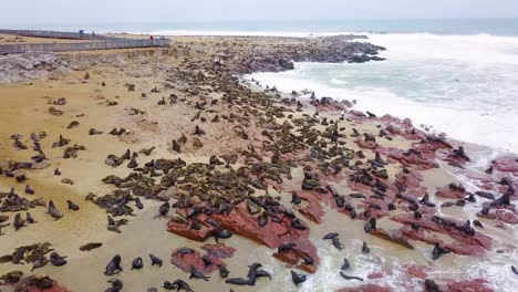 Aerial-over-the-Cape-Cross-seal-reserve-colony-on-the-Skeleton-coast-of-Namibia-4
