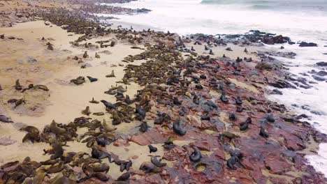 Aerial-over-the-Cape-Cross-seal-reserve-colony-on-the-Skeleton-coast-of-Namibia-5