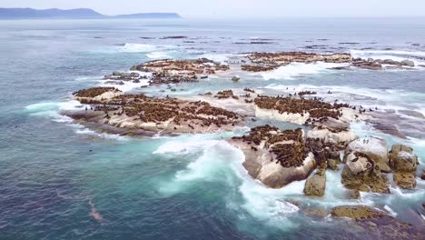 Drone-aerial-over-massive-seal-colony-on-a-small-island-off-the-coast-of-South-Africa-2