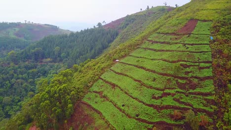 Aerial-over-a-tea-plantation-growing-on-very-steep-cliffs-in-Uganda-Africa
