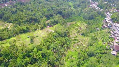 Aerial-over-vast-terraced-rice-paddies-near-Ubud-Bali-Indonesia