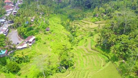Aerial-over-vast-terraced-rice-paddies-near-Ubud-Bali-Indonesia-1