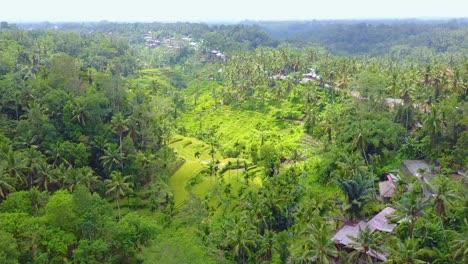 Aerial-over-vast-terraced-rice-paddies-near-Ubud-Bali-Indonesia-2