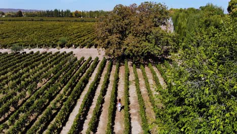 Aerial-over-a-woman-walking-through-a-vineyard-winery-in-Argentina