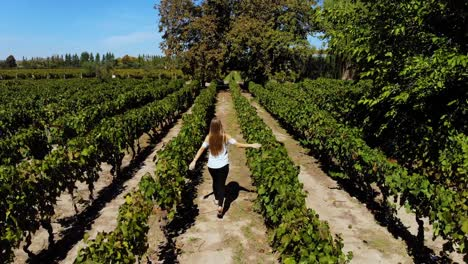 Aerial-over-a-woman-walking-through-a-vineyard-winery-in-Argentina-1