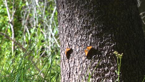 A-Massive-Butterfly-Migration-Moves-Through-A-Forest-In-Southern-California-1
