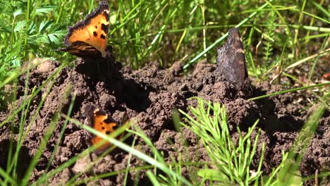 A-Massive-Butterfly-Migration-Moves-Through-A-Forest-In-Southern-California-3