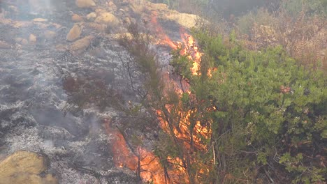 Close-Up-Of-A-Generic-Forest-Fire-Or-Brush-Fire-Burning-And-Consuming-Vegetation-On-The-Hills-Of-Southern-California