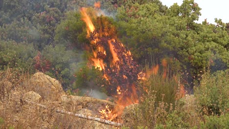 Close-Up-Of-A-Generic-Forest-Fire-Or-Brush-Fire-Burning-And-Consuming-Vegetation-On-The-Hills-Of-Southern-California-2