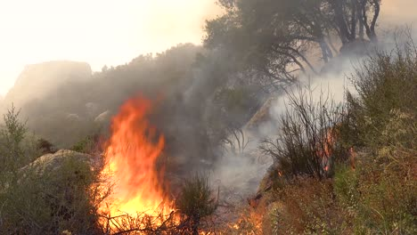 Close-Up-Of-A-Generic-Forest-Fire-Or-Brush-Fire-Burning-And-Consuming-Vegetation-On-The-Hills-Of-Southern-California-3