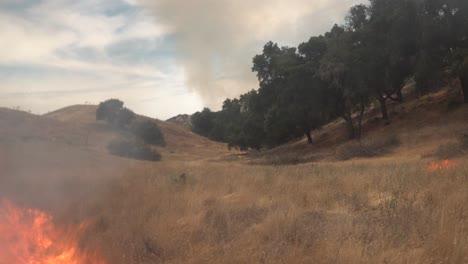 A-Controlled-Prescribed-Wildfire-Burns-Around-A-Remote-Unmanned-Camera-In-A-Wilderness-Area-In-Santa-Barbara-County-California