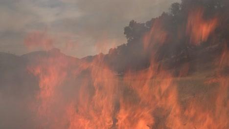 A-Controlled-Prescribed-Wildfire-Burns-Around-A-Remote-Unmanned-Camera-In-A-Wilderness-Area-In-Santa-Barbara-County-California-1