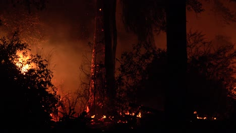 Night-Forest-Fire-Burning-During-Lightning-Complex-Fire-In-Santa-Cruz-Mountains-California