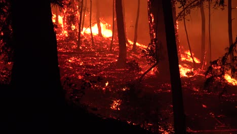 Night-Forest-Fire-Burning-During-Lightning-Complex-Fire-In-Santa-Cruz-Mountains-California-1