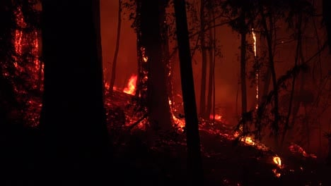 Night-Forest-Fire-Burning-During-Lightning-Complex-Fire-In-Santa-Cruz-Mountains-California-2