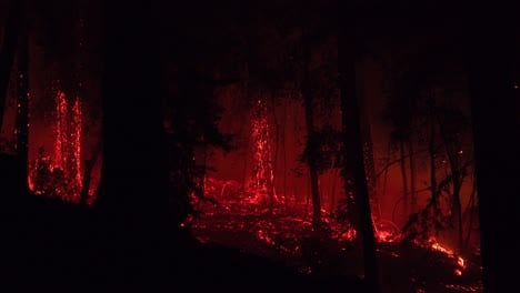 Night-Forest-Fire-Burning-During-Lightning-Complex-Fire-In-Santa-Cruz-Mountains-California-3