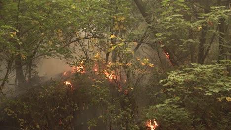 Los-Bomberos-En-El-Complejo-De-Rayos-De-Agosto-Incendio-En-Santa-Cruz-California-1