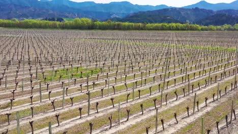 Aerial-Over-A-Vineyard-Farm-Farmland-On-The-South-Island-Of-New-Zealand-Wine-Making-Region