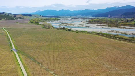 Aerial-Over-A-Vineyard-Farm-Farmland-On-The-South-Island-Of-New-Zealand-Wine-Making-Region-1