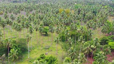 Agradable-Inclinación-Hacia-Arriba-El-Establecimiento-De-Antena-De-Una-Isla-En-Vanuatu-Melanesia-Islas-Del-Pacífico-Y-Bosque-De-Palmeras